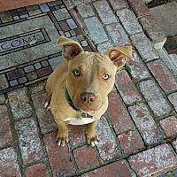 Adopt A Pet :: Suzy - BONITA, CA
