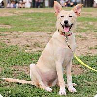 Adopt A Pet :: Agnes - San Mateo, CA