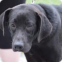 Adopt A Pet :: RHYLEY - Rockwood, TN