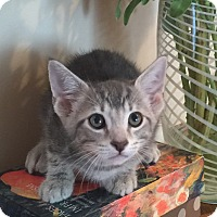 Adopt A Pet :: Saguaro - Mission Viejo, CA