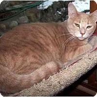 Domestic Shorthair Cat for adoption in Sheboygan, Wisconsin - George