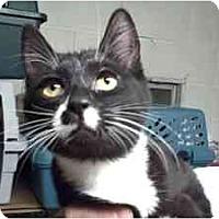 Adopt A Pet :: Lila & Sammy - Moses Lake, WA