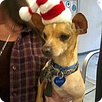 Adopt A Pet :: BABY - Mahopac, NY