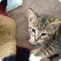 Adopt A Pet :: Oliver - Delmont, PA
