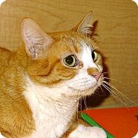 Adopt A Pet :: Miss Josie - Bentonville, AR