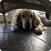 Adopt A Pet :: Meadow - Yorktown, VA