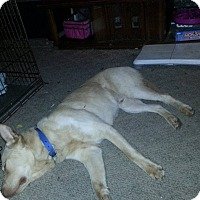Adopt A Pet :: Milo-Loki - sanford, NC