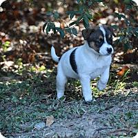 Adopt A Pet :: Farran - Groton, MA