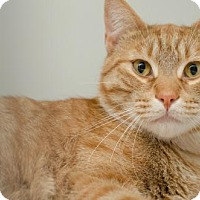 Adopt A Pet :: Muffin (4) - Ashland, MA