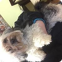Adopt A Pet :: Yuki- ON HOLD! - Rochester, NY