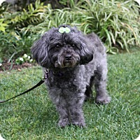 Adopt A Pet :: STEPHANIE - Newport Beach, CA