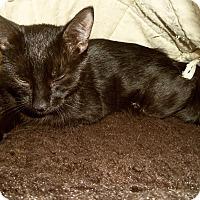 Adopt A Pet :: LELA - Medford, WI