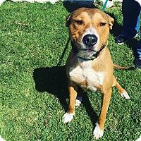 Adopt A Pet :: Otis (Tripp) - Thousand Oaks, CA