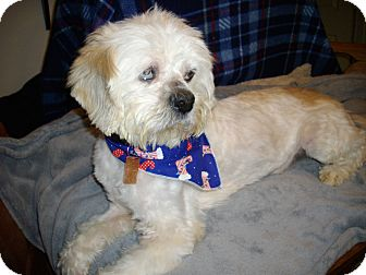 Tibetan Terrier Mix Dog for adoption in Sheridan, Oregon - Quincy