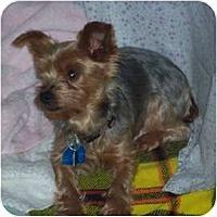 Adopt A Pet :: Charm - LE MESA, CA