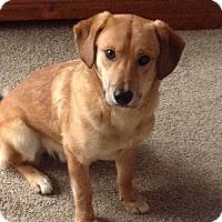 Adopt A Pet :: Freddy - Hamilton, ON