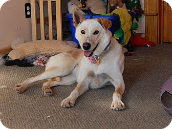 Hound (Unknown Type)/Pointer Mix Dog for adoption in Peterborough, Ontario - Ginger