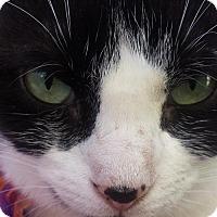 Adopt A Pet :: DELPHINE - Ridgewood, NY