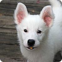 Adopt A Pet :: Harvey - Austin, TX