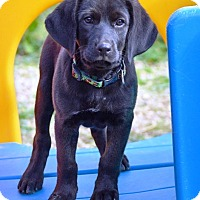Adopt A Pet :: Peko - Pleasant Plain, OH