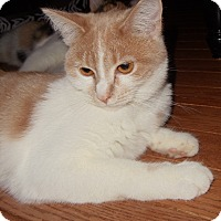 Adopt A Pet :: Angel - Evans, WV