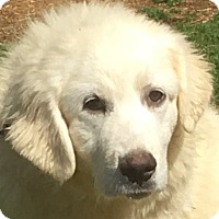 Adopt A Pet :: Bailey - Staunton, VA