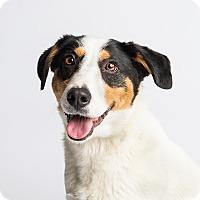 Adopt A Pet :: Katy - Ogden, UT