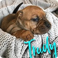 Adopt A Pet :: Trudy - San Antonio, TX