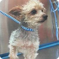 Adopt A Pet :: Tommy - Loxahatchee, FL