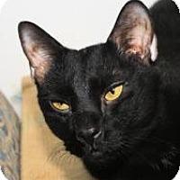 Adopt A Pet :: Siggy - St. James City, FL