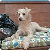 Adopt A Pet :: Sammy - Encinitas, CA