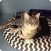 Adopt A Pet :: Grayson - Lake Charles, LA