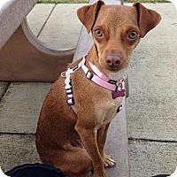 Adopt A Pet :: Annie - Oakland, CA