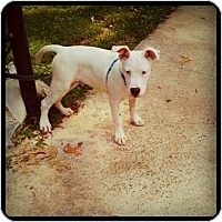 Adopt A Pet :: colby - conyers, GA