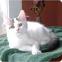 Adopt A Pet :: Vera (with Stanley) - Portland, OR
