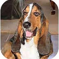 Adopt A Pet :: Henry James - Phoenix, AZ