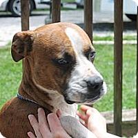 Adopt A Pet :: Diamond - ARDEN, NC