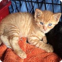 Adopt A Pet :: Angela - Brooklyn, NY