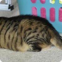 Adopt A Pet :: Sonia - Bowling Green, VA