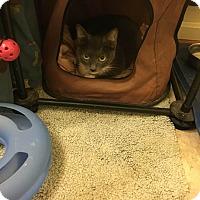 Adopt A Pet :: Smoky - Columbia, MD