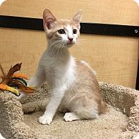 Adopt A Pet :: Liberty - Riverside, CA