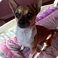 Adopt A Pet :: Danza - Van Nuys, CA