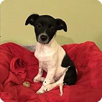 Adopt A Pet :: Kit kat - Tumwater, WA