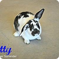 Mini Lop Mix for adoption in Hamilton, Ontario - Betty
