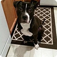 Adopt A Pet :: Benji - Wheaton, IL