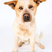 Adopt A Pet :: Billybob - Marietta, GA