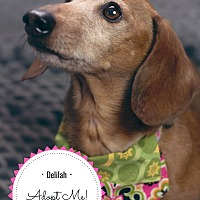 Adopt A Pet :: Delilah - Omaha, NE