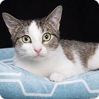 Adopt A Pet :: Mollie - Nashville, TN
