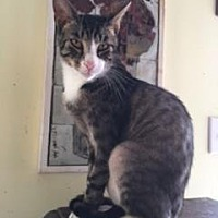 Adopt A Pet :: ZIPPER - Washington, NC