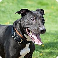 Adopt A Pet :: Sin Jin  35037907 - Westampton, NJ
